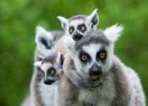 Oferta Madagascar