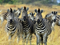 Oferta Botswana